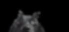 Closeup of a Black Dog