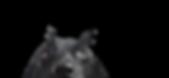 Närbild på en Black Dog