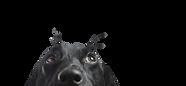 株式会社PET