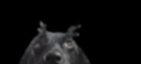 cachorro olhado pra cima