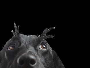 """I principali disturbi comportamentali del cane adulto"""