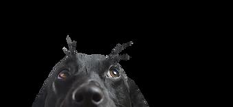 Zbliżenie z Black Dog