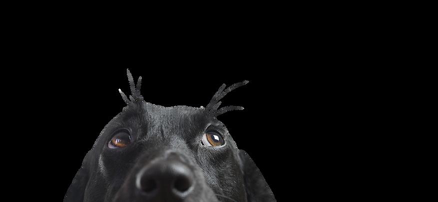 Canil K9 - Treinamento de Cães
