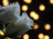 nuit fleur.jpg