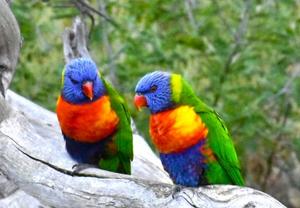 Australian Wildlife @ Yarra Bend Park