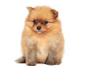Jak na psí chlupy v domácnosti?