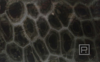 petrostone-turquise1.jpg