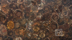 petrostone-Petrified-Wood-Round-Panel.jp
