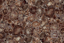 petrostone-PetrifiedWoodBrown.jpg
