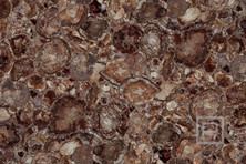 petrostone-PetrifiedWoodBrown.jpg