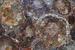 petrostone-Petrified-Wood-Round.jpg