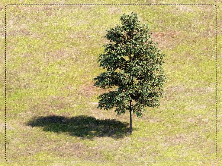 Tree Revit 03 High Quality