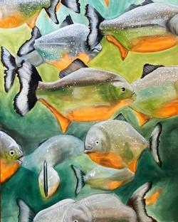 Red Bellied Piranhas, 2020