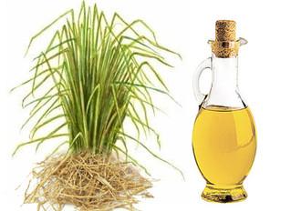 Benefits of Vetiver Oil on Skin
