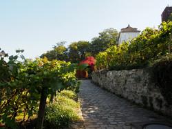 Path between the vines