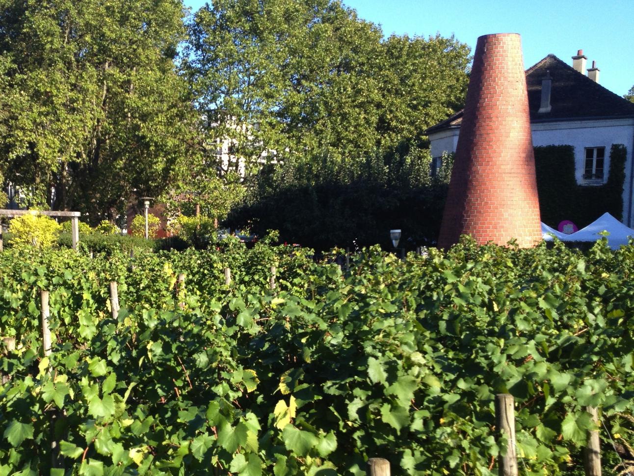 Bercy vineyard