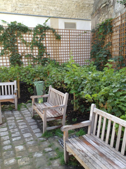 Vines and benches