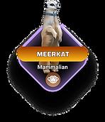 Meerkat-min.png
