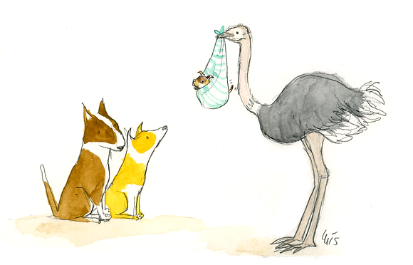 Special Delivery Ostrich