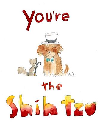 You're the Shihtzu
