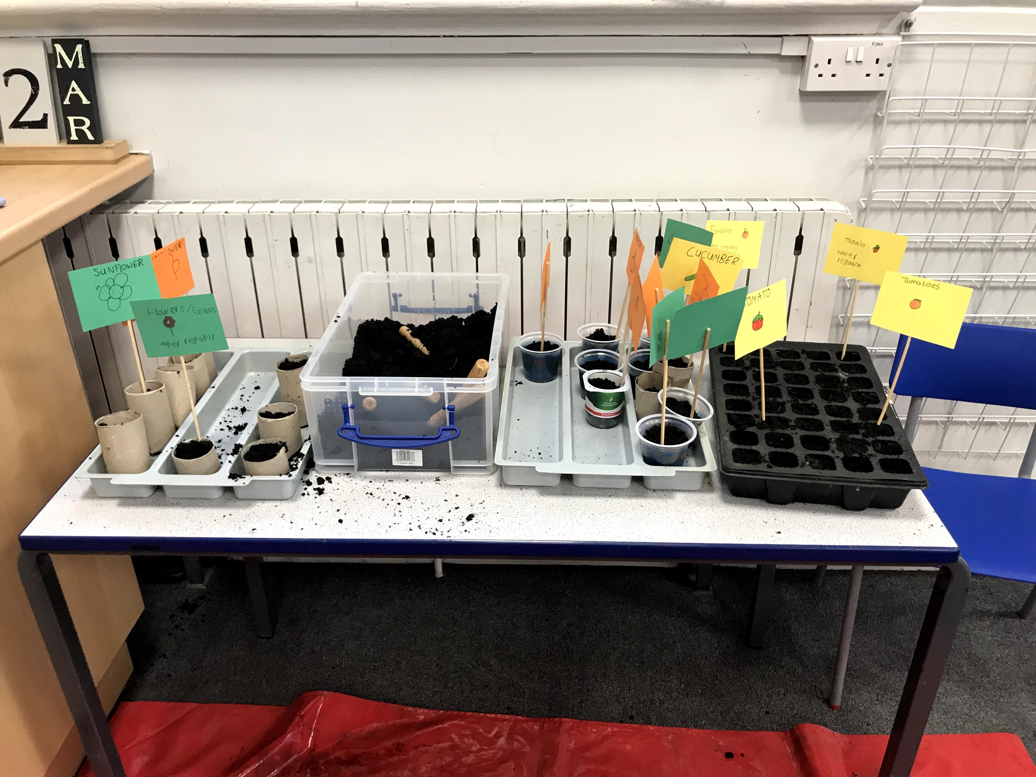 Class 9 Planting Vegetables