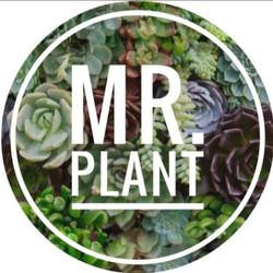 Mr. Plant Chile