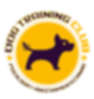 Dog Training Club chile adiestramiento canino