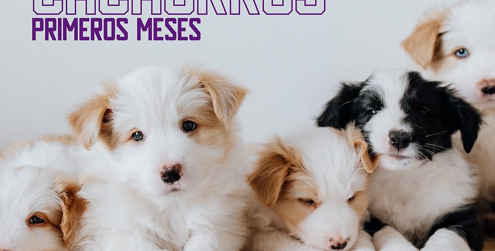 ¿Cachorro Nuevo?: Clase Online
