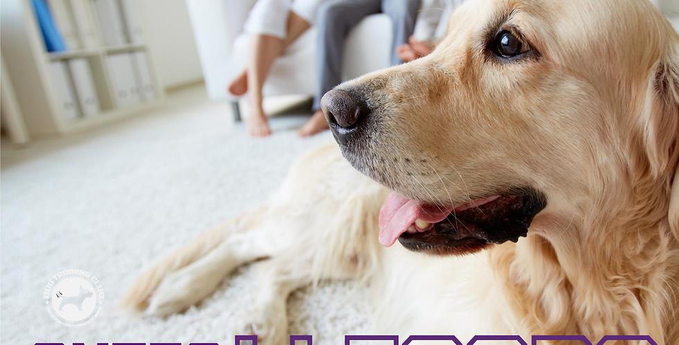 ¿Pensando en tener un perro?: Clase online.