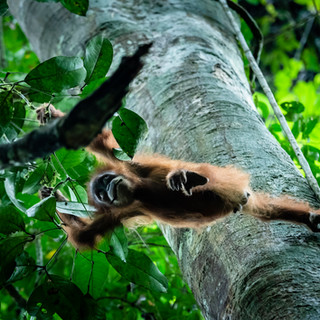 Ketambe Rain forest, Sumatra, Indonesia
