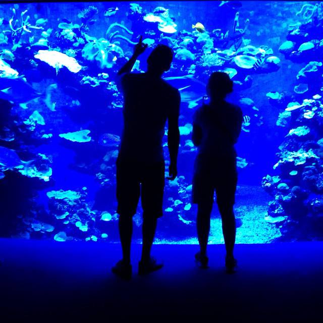 aquarium mystic fish restaurant