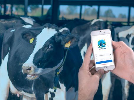 Nova versão da plataforma CheckMilk está disponível para o produtor de leite