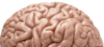 right-side-brain-important-side_2a8d3fe628f796b7.jpg
