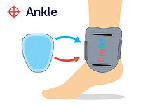 ankle.png