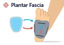 plantar fascia.png