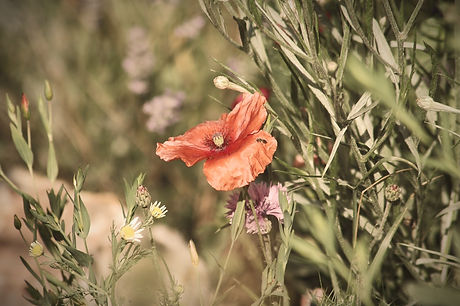 flower-3542974_1280_edited.jpg