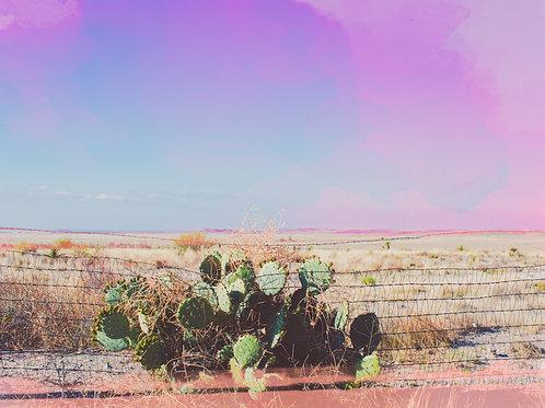 Marfa Cacti Print
