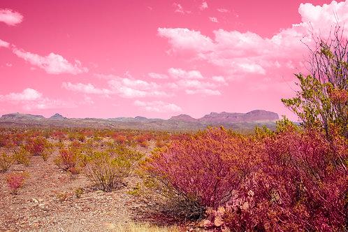Big Bend Pink Landscape II