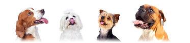 PuppyGradient.jpg