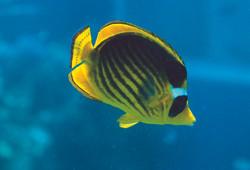 Underwater of Aqaba 3