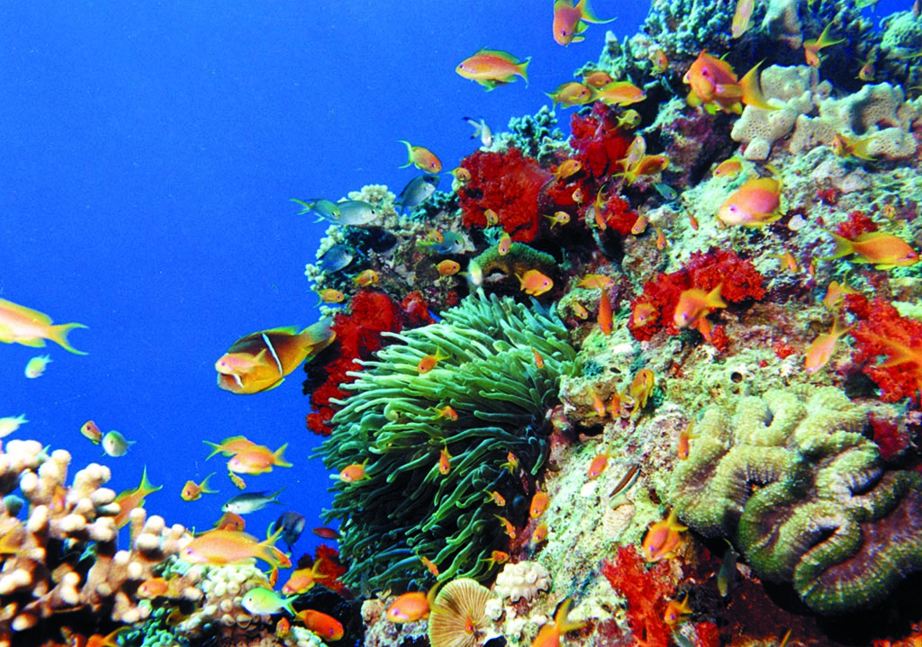 Underwater of Aqaba 4