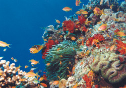 Underwater of Aqaba 4