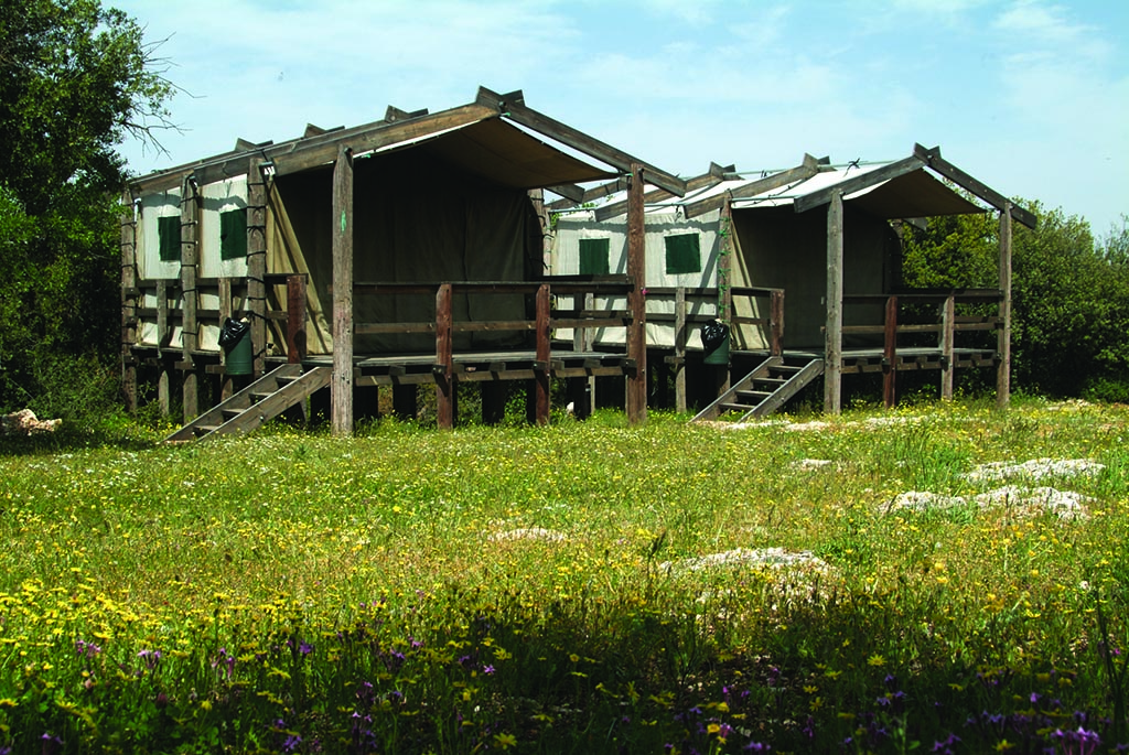 Ajlun Reserve 1.jpg