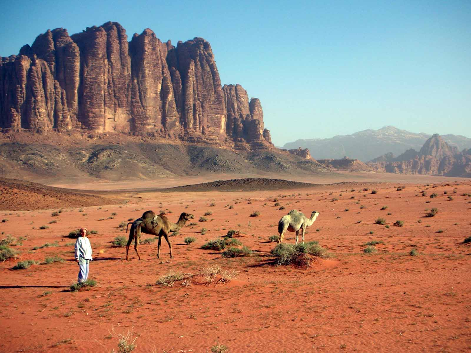Bedouin with his camels