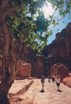 Picture of Al-Siq in Petra 5