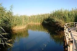 Azraq Wetland