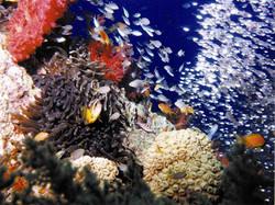 Underwater of Aqaba 1
