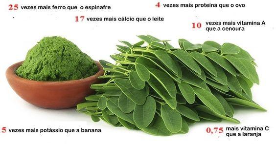 """Outros exemplos de plantas medicinais que estão sendo """"adotadas"""" pelos cientistas são a moringa, ou acácia-branca, tida como uma """"planta milagrosa"""", e o pequi, capaz de prevenir e regredir o câncer."""