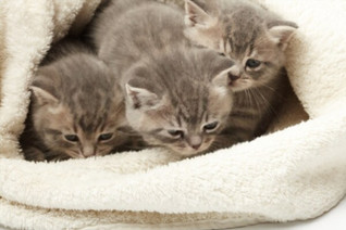 Litter G5   Born 31/10/2020 - Currently Available