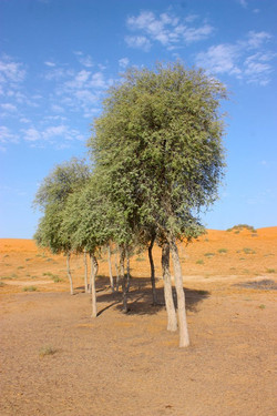 Abu Dhabi Nature